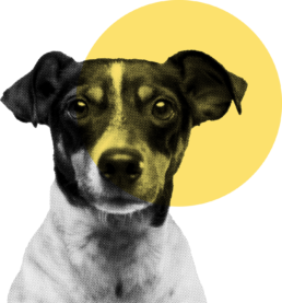 A dog with a yellow circle over its face